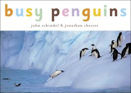 Download: Busy Penguins