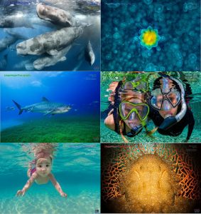 download Underwater Photography - 2017 Full Year Issues Collection